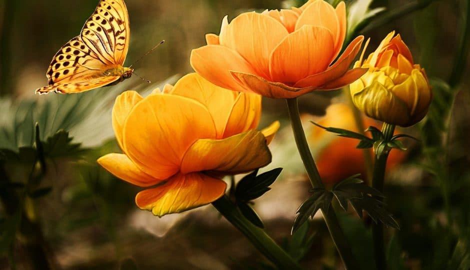 Quelques conseils pour embellir son jardin